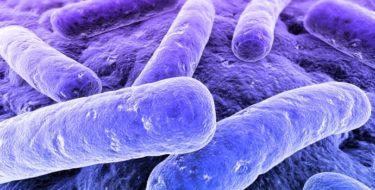 Goede bacteriën en weerstand