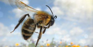 Allergie: wat is een allergische reactie en wat kun je ertegen doen?