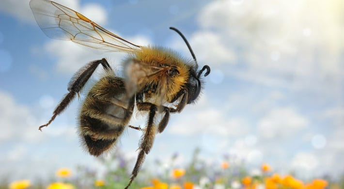 Allergie Planten Huid : Allergie: wat is een allergische reactie en wat kun je ertegen doen