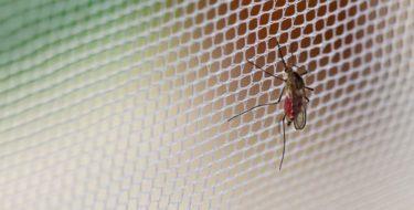 wat helpt tegen muggen