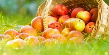 Is een appel gezond? 5 weetjes over appels…
