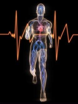 ideale hartslag vetverbranding berekenen