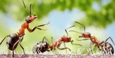 mieren in huis bestrijden