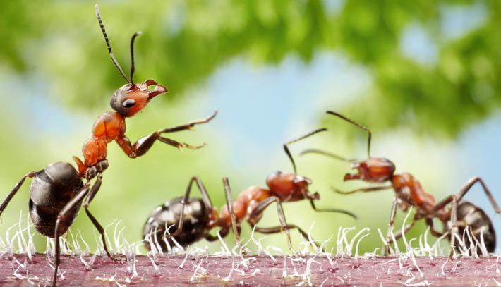 Wat helpt echt tegen mieren