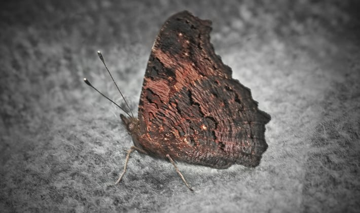 Motten in huis bestrijden – Hoe bestrijd & verdelg je motjes ...