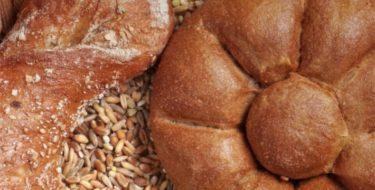 Gist-allergie: allergisch, intolerant of overgevoelig voor gisten