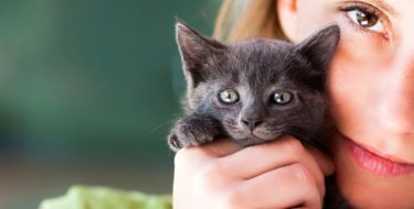 Allergisch voor katten? Alles over kattenallergie!