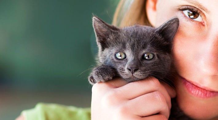 benauwdheid bij katten