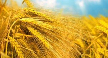 Glutenintolerantie: waarom zijn gluten slecht voor je?