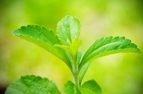 Is de zoetstof stevia goed, gezond & veilig of niet?