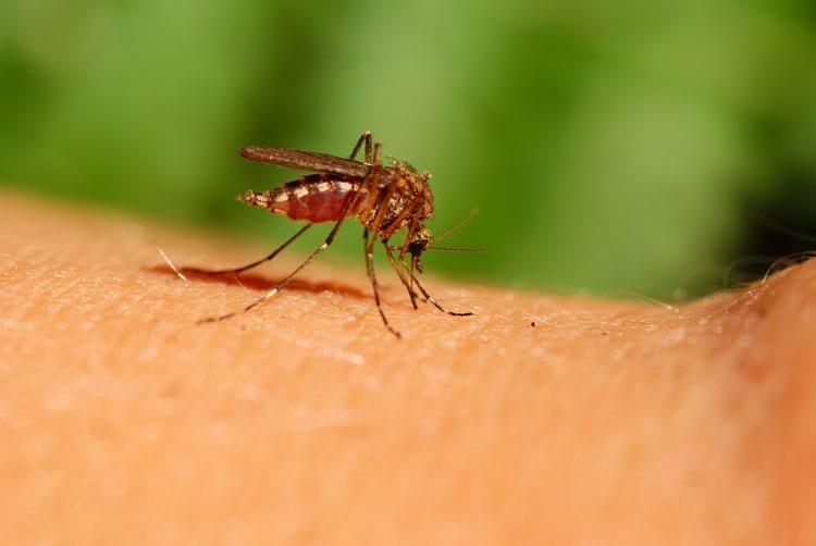 allergie muggen