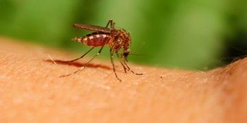 10 tips tegen muggen: de beste antimuggenmiddelen!