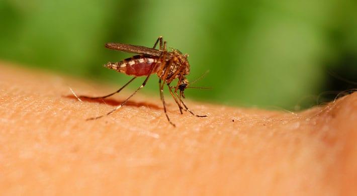 Gordijn Tegen Vliegen : Tips tegen muggen de beste antimuggenmiddelen gezondr