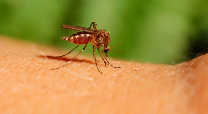 10 tips tegen muggen de beste antimuggenmiddelen