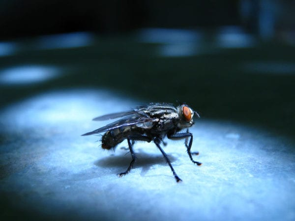 Vliegen bestrijden in huis: 6 tips bij vliegenbestrijding!