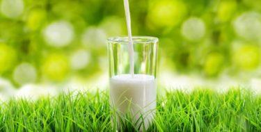 melk ongezond koemelk gezondheid