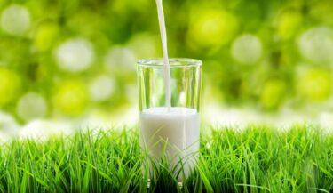 Koemelk gezond? Melk = ongezond + nergens goed voor…