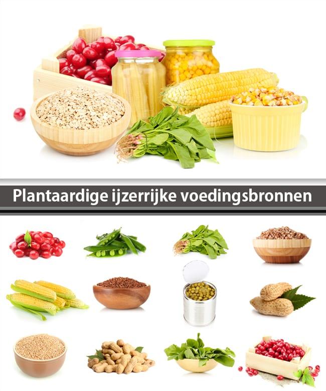 proteine voeding lijst