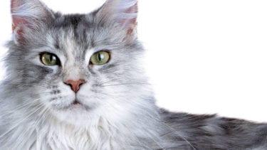 5 tips voor de optimale kattenvoeding