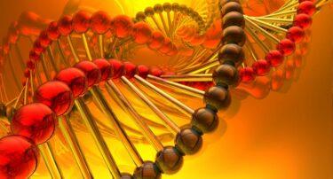 Vitamine B12-tekort: klachten, behandeling & supplementen