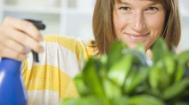 Rouwvliegjes / rouwmugjes: kleine vliegjes in kamerplanten & potgrond