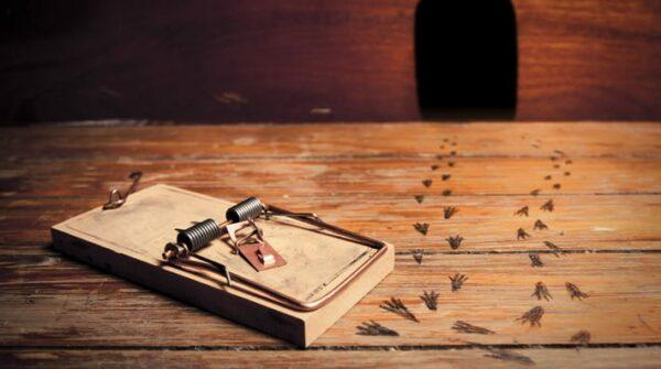 Muizenoverlast: 5 tips voor een muisvrije woning!